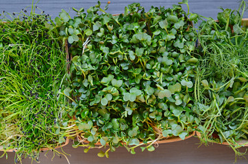 Fresh mixed microgreens on a wooden table
