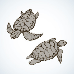 Turtle. Vector drawing