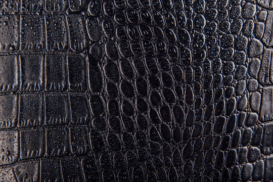 Glossy crocodile or snake skin leather background. Black texture covered with water drops