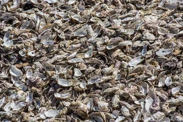 Oysters shells at fish market