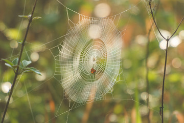 Web spider in nature