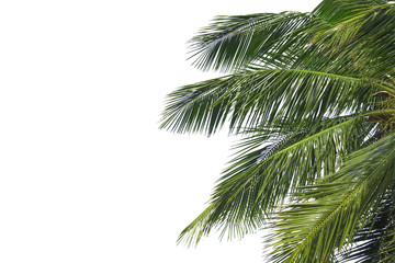 Hello summer floral with tropical green leaves Concept. coconut palm leaves isolated on white background,with clipping path. can be used for display or enter text and montage anything your .