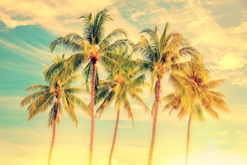 Group of palm trees, vintage style, summer and travel concept