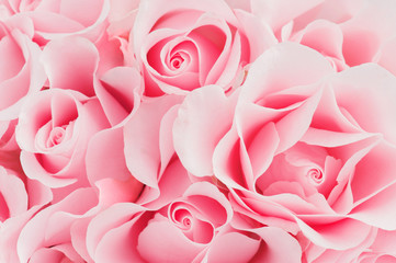 Delicate pink background of blooming roses