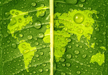 World Map on Green Leaf with Water Drops, Water and Earth Day Concept