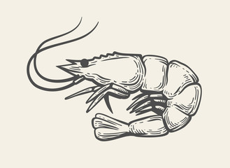 Prawn or Shrimp vector