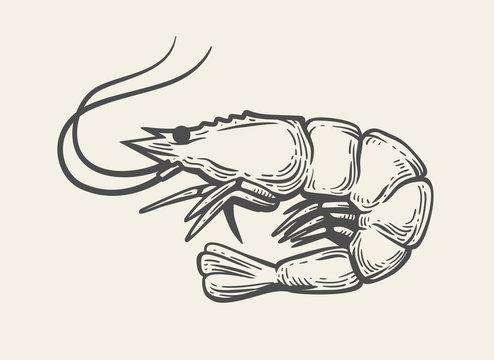 Prawn or Shrimp vector