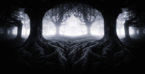 Scary dark forest with tree roots Wall mural