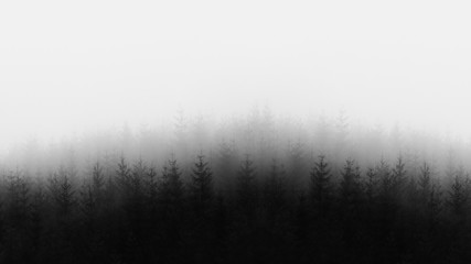 distant forest in black and white and copy space Wall mural