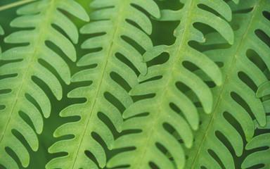 Green Leaf Branch