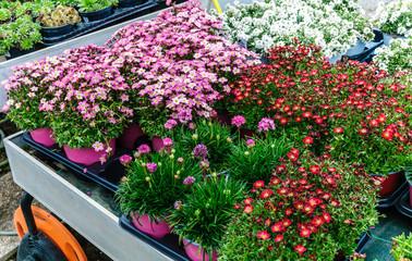 Cerca immagini da studio gi for Piantine fiorite perenni