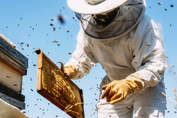 Spoed Fotobehang Bee Beekeeper working collect honey.
