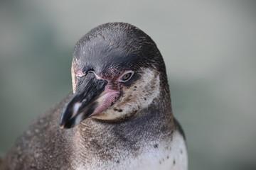 Wonderful portrait of a cute penguin