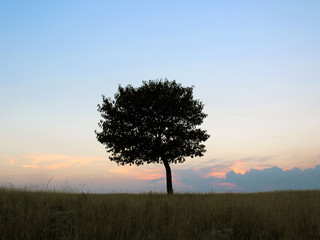 One tree in an empty field. Against the background of the sunset
