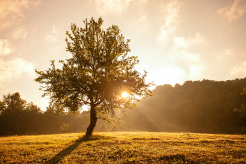 Serene view of tree with morning sunlight