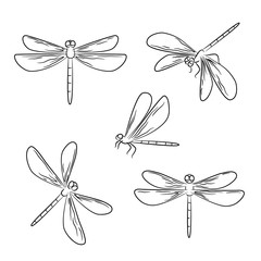 vector contour dragonfly insect nature on white childish coloring book