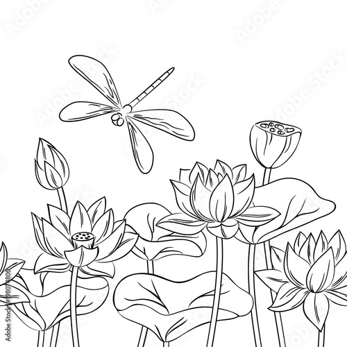 Vector Contour Dragonfly Insect Lotus Flower On White Childish Coloring Book Seamless Pattern