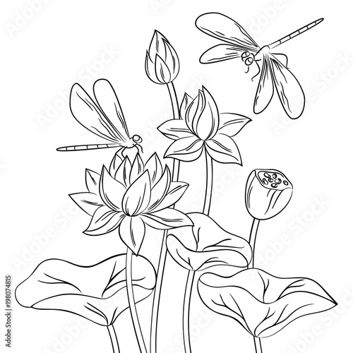 Vector Contour Dragonfly Insect Lotus Flower On White Childish Coloring Book