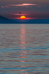 spectacular sunset at lake constance with bird crossing