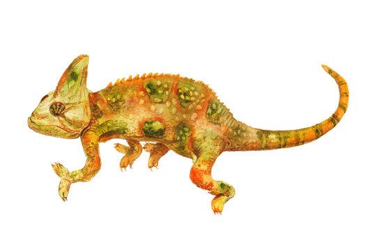 Watercolor green and orange chameleon