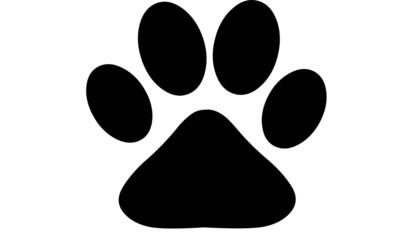 Dog Paw Puppy Paws