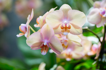 Closeup orchids
