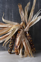 Ears of Flint Corn Leaning on a Gray Rustic Wall