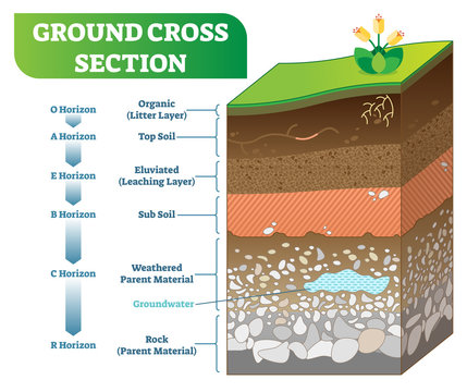 Ground Cross Section vector illustration with organic, topsoil, subsoil and other horizon levels.