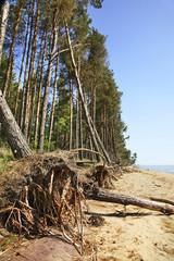 View of Curonian Spit. Kaliningrad Oblast. Russia