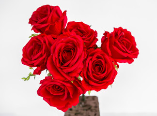 Rose - Flower, Holiday - Event, Plant, Red, White Color