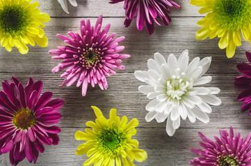 Chrysanthemum Flowers Arranged on White Table Wall mural
