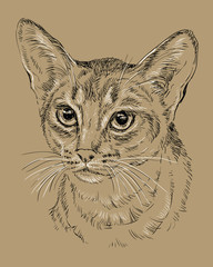 Abyssinian Cat on brown background