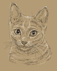 Russian Blue Cat on brown background