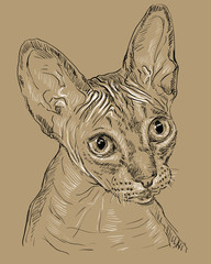 Sphynx cat on brown background