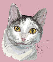 Colorful cat white and grey color