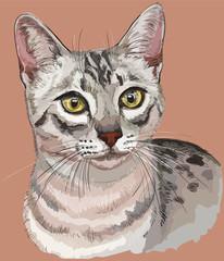 Colorful Egyptian Mau Cat