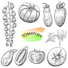 Hand drawn tomatoes set isolated on white background.