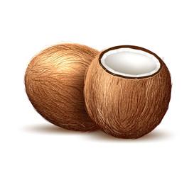 Vector realistic coconut exotic fruit 3d