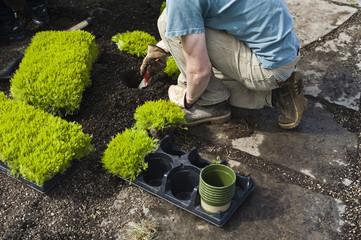 Landscaper installing plants in garden.