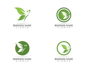 Green butterfly logo design vector illustration