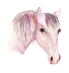 Watercolor beautiful horse head