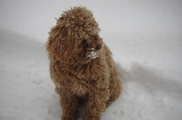 The teddy in the snow.