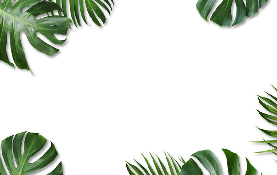 Monstera deliciosa and yellow palm tropical leaves isolated on white background