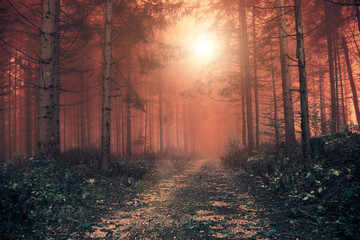 Wall Mural - Fantasy red colored foggy forest with mystic sunlight. Color filter effect used.
