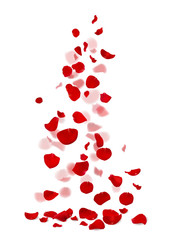 Red and pink rose petals falling down. Flower vector illustration. Detailed floral design.