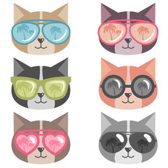 cats with colorful sunglasses isolated on white