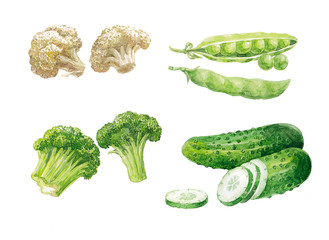 Watercolors hand-drawnset of vegetables on white background (isolated)