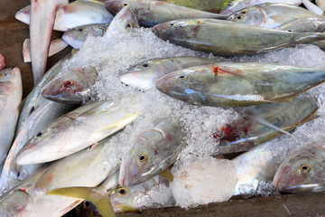 Fresh fish  on fish market in Victoria, Mahe Island, Seychelles