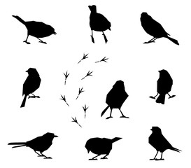 A set of silhouettes of winter birds.