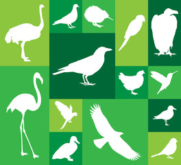 Large and detailed set of different bird icons.